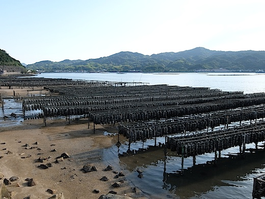 22江田島牡蠣養殖1.jpg